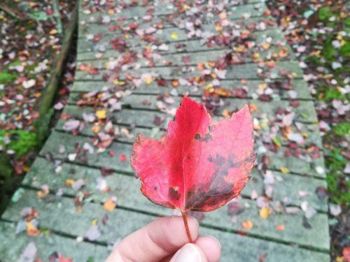 Laub Herbst Farben im Oktober